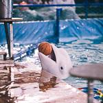Мобильный дельфинарий в Екатеринбурге, фото 14