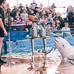 Мобильный дельфинарий в Екатеринбурге, фото 15