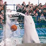 Мобильный дельфинарий в Екатеринбурге, фото 16