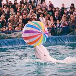 Мобильный дельфинарий в Екатеринбурге, фото 17