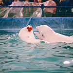 Мобильный дельфинарий в Екатеринбурге, фото 19