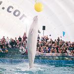 Мобильный дельфинарий в Екатеринбурге, фото 20
