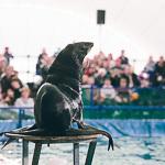 Мобильный дельфинарий в Екатеринбурге, фото 22