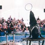 Мобильный дельфинарий в Екатеринбурге, фото 24