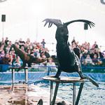 Мобильный дельфинарий в Екатеринбурге, фото 26