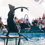 Мобильный дельфинарий в Екатеринбурге, фото 27