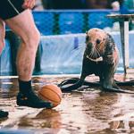 Мобильный дельфинарий в Екатеринбурге, фото 28
