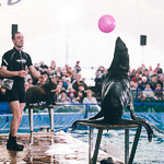 Мобильный дельфинарий в Екатеринбурге, фото 29