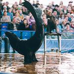 Мобильный дельфинарий в Екатеринбурге, фото 31