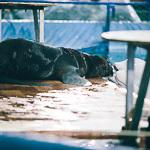 Мобильный дельфинарий в Екатеринбурге, фото 32