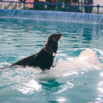 Мобильный дельфинарий в Екатеринбурге, фото 33