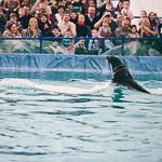 Мобильный дельфинарий в Екатеринбурге, фото 34