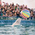 Мобильный дельфинарий в Екатеринбурге, фото 35