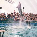 Мобильный дельфинарий в Екатеринбурге, фото 37
