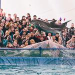 Мобильный дельфинарий в Екатеринбурге, фото 38
