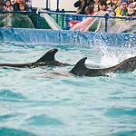 Мобильный дельфинарий в Екатеринбурге, фото 39
