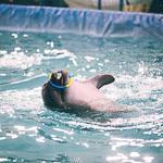 Мобильный дельфинарий в Екатеринбурге, фото 40