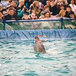 Мобильный дельфинарий в Екатеринбурге, фото 41