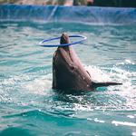 Мобильный дельфинарий в Екатеринбурге, фото 42