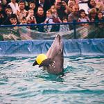 Мобильный дельфинарий в Екатеринбурге, фото 43