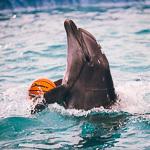 Мобильный дельфинарий в Екатеринбурге, фото 44