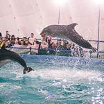 Мобильный дельфинарий в Екатеринбурге, фото 45