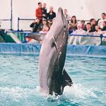 Мобильный дельфинарий в Екатеринбурге, фото 46