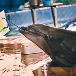 Мобильный дельфинарий в Екатеринбурге, фото 47