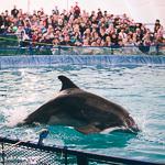 Мобильный дельфинарий в Екатеринбурге, фото 49