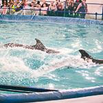 Мобильный дельфинарий в Екатеринбурге, фото 50