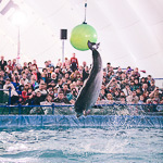 Мобильный дельфинарий в Екатеринбурге, фото 51