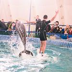 Мобильный дельфинарий в Екатеринбурге, фото 54