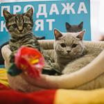Выставка кошек Wild Wild Cats 2014 в Екатеринбурге, фото 1
