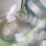 Выставка кошек Wild Wild Cats 2014 в Екатеринбурге, фото 17