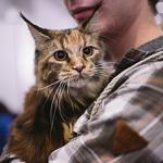 Выставка кошек Wild Wild Cats 2014 в Екатеринбурге, фото 18