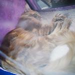 Выставка кошек Wild Wild Cats 2014 в Екатеринбурге, фото 24