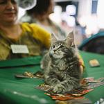 Выставка кошек Wild Wild Cats 2014 в Екатеринбурге, фото 27