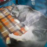 Выставка кошек Wild Wild Cats 2014 в Екатеринбурге, фото 28
