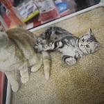 Выставка кошек Wild Wild Cats 2014 в Екатеринбурге, фото 45