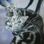 Выставка кошек Wild Wild Cats 2014 в Екатеринбурге, фото 46