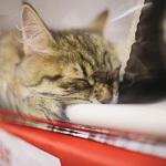 Выставка кошек Wild Wild Cats 2014 в Екатеринбурге, фото 47