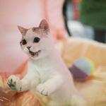Выставка кошек Wild Wild Cats 2014 в Екатеринбурге, фото 61