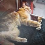 Выставка кошек Wild Wild Cats 2014 в Екатеринбурге, фото 62