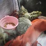 Выставка кошек Wild Wild Cats 2014 в Екатеринбурге, фото 64
