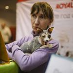 Выставка кошек Wild Wild Cats 2014 в Екатеринбурге, фото 65