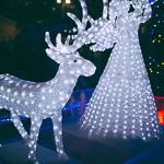 Новогодние ёлки в Екатеринбурге, фото 69