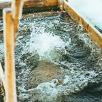 Крещенские купания в Екатеринбурге, фото 28