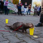 День хорька в Екатеринбурге, фото 22