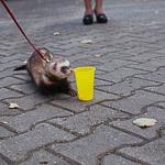 День хорька в Екатеринбурге, фото 26