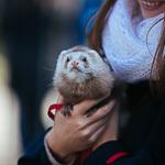 День хорька в Екатеринбурге, фото 33